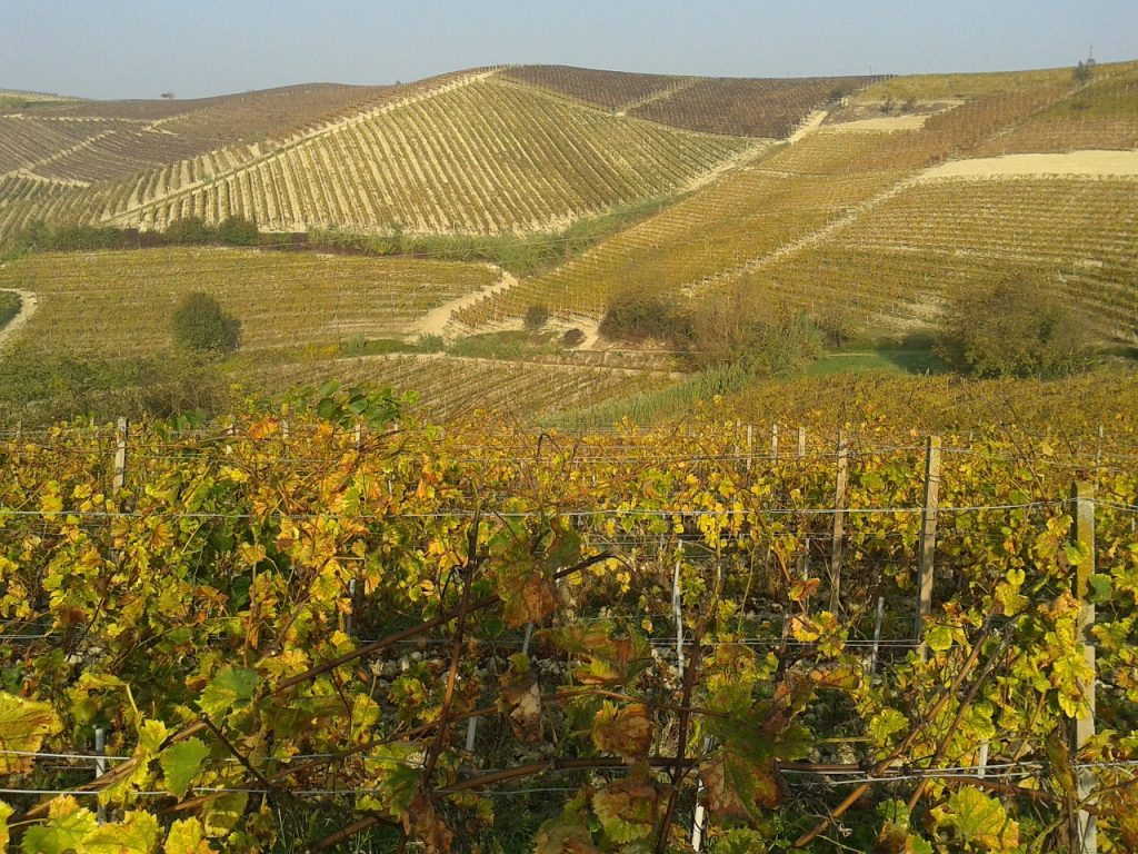 Falling in love with the Langhe in autumn